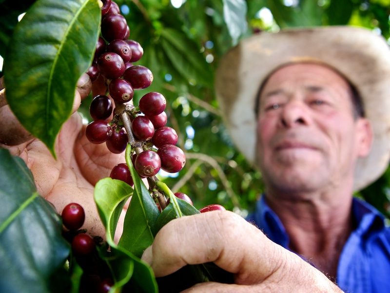 Fairtrade coffee growers Costa Rica