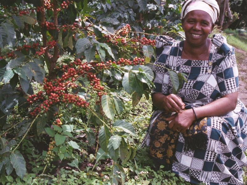Cafedirect Fairtrade tea and coffee from Uganda