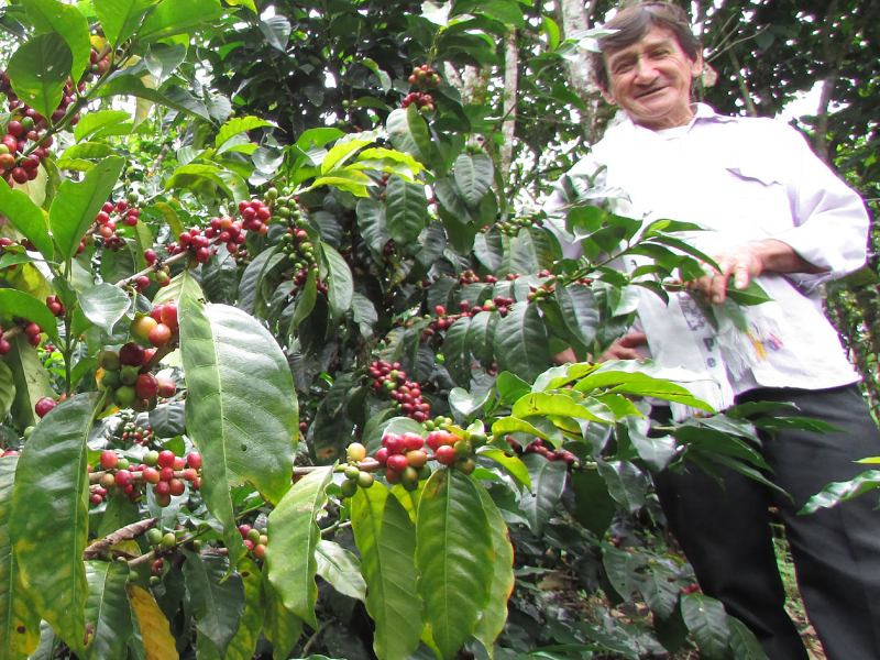 Cafedirect Fairtrade Coffee Colombia Cosurca