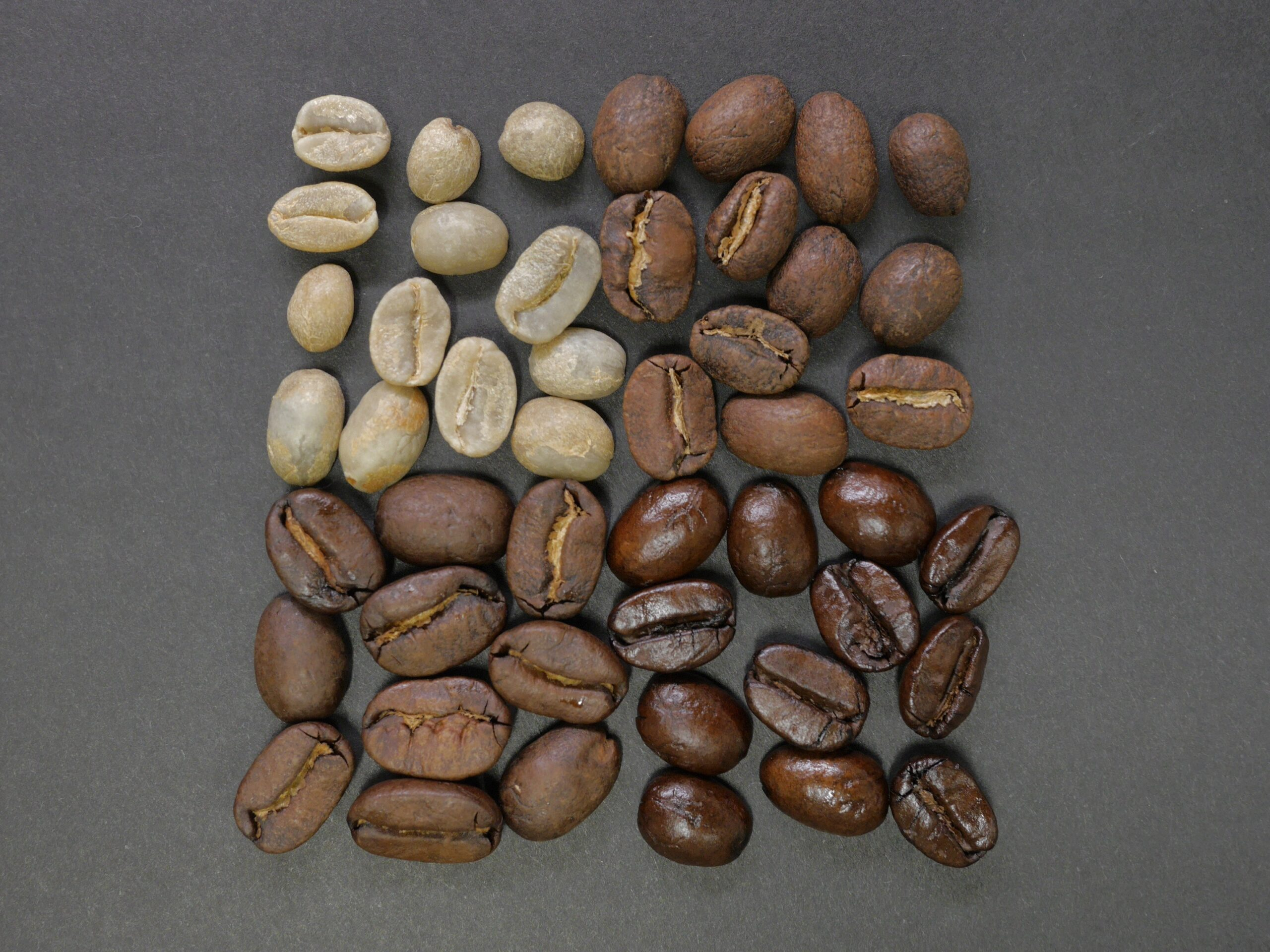 Coffee Bean Types and Their Characteristics