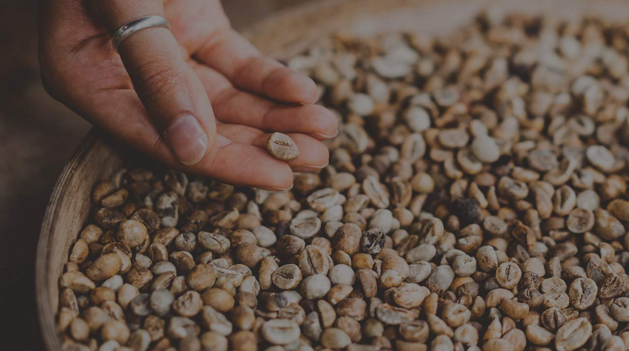 The Next Step of Processing Coffee: Drying